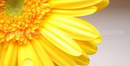 Лилии, розы Эквадор, герберы, тюльпаны, хризантемы, альстромерии и великолепные букеты круглосуточно от салона цветов CityFlowers.